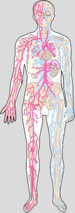 Circulatory_system_2